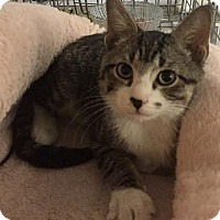 Adopt A Pet :: Cage - Dallas, TX