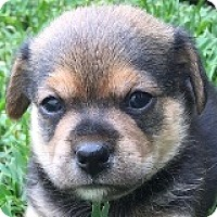 Adopt A Pet :: Clyde Campbell - Houston, TX