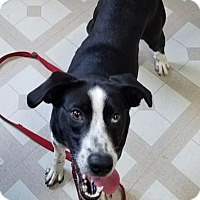 Adopt A Pet :: Ruby - Red Wing, MN