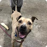 Adopt A Pet :: Duke - Park Ridge, NJ