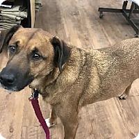 Adopt A Pet :: Rocky - Avon, NY