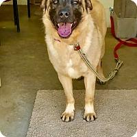 Adopt A Pet :: KAISER - Cadiz, OH