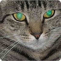 Adopt A Pet :: Maggie May - Riverside, RI