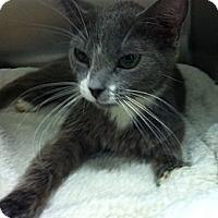 Adopt A Pet :: Trixie - Slatington, PA