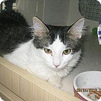 Adopt A Pet :: Dennis - West Dundee, IL