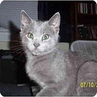 Adopt A Pet :: Rocky - Cleveland, OH