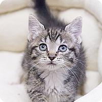Adopt A Pet :: Tia - Chicago, IL