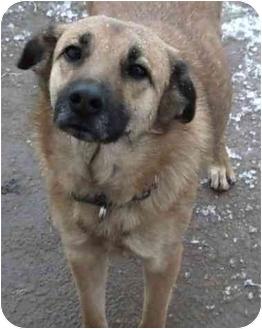German Shepherd Dog Mix Dog for adoption in Wichita Falls, Texas - Gabby
