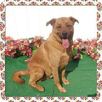 Labrador Retriever Mix Dog for adoption in Marietta, Georgia - DUKE - adopted @ off-site