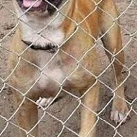 Adopt A Pet :: Brad - Hankamer, TX