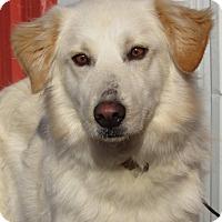 Adopt A Pet :: Josie - Kiowa, OK