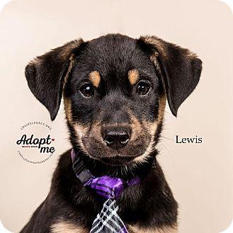 German Shepherd Dog Mix Puppy for adoption in Cincinnati, Ohio - Lewis