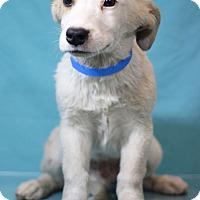 Adopt A Pet :: Kent - Waldorf, MD