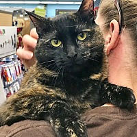 Adopt A Pet :: Pixel the Pretty Tortie Sweetie - Brooklyn, NY