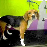 Adopt A Pet :: Rizzo - Houston, TX