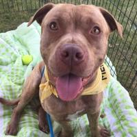 Adopt A Pet :: Heath - Corvallis, OR