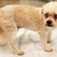 Adopt A Pet :: Daredevil - Twinsburg, OH