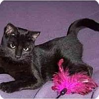 Adopt A Pet :: Kitty Corn - Spencer, NY