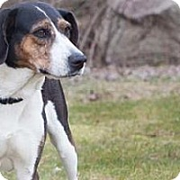 Adopt A Pet :: Utah - Novelty, OH