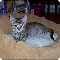 Adopt A Pet :: Sukey - Davis, CA