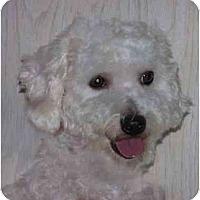 Adopt A Pet :: Travis - La Costa, CA
