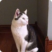 Adopt A Pet :: Bebe - West Dundee, IL