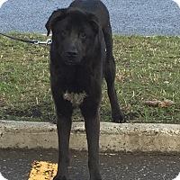 Adopt A Pet :: Simon - BC Wide, BC