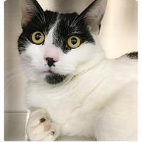 Adopt A Pet :: Dottie - Webster, MA