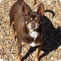 Adopt A Pet :: Pico - Delta, CO