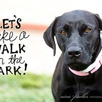 Adopt A Pet :: Que - Marietta, GA