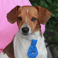 Adopt A Pet :: Wishbone - Garfield Heights, OH