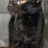 Adopt A Pet :: pepper - Robinson, IL