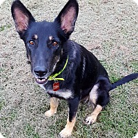 Adopt A Pet :: Ryka - Nashua, NH