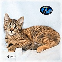 Adopt A Pet :: Bella - Howell, MI