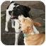 Photo 2 - Terrier (Unknown Type, Medium) Mix Dog for adoption in Garland, Texas - Daddy Jack