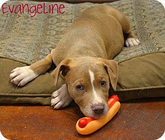 Doberman Pinscher/Weimaraner Mix Puppy for adoption in Metairie, Louisiana - Evangeline