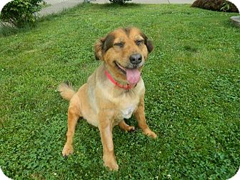 Retriever (Unknown Type)/Shepherd (Unknown Type) Mix Dog for adoption in West Deptford, New Jersey - GRACE