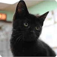 Adopt A Pet :: Mazzystar - Secaucus, NJ