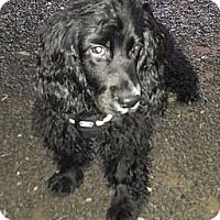 Adopt A Pet :: Toby - Ottawa, ON