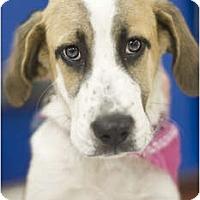 Adopt A Pet :: Costa - Arlington, TX