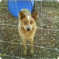 Adopt A Pet :: Chico - Emory, TX