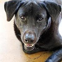 Adopt A Pet :: Rexx - Memphis, TN