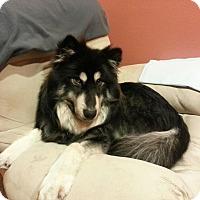 Adopt A Pet :: Tucker - Gig Harbor, WA