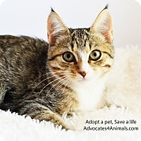 Adopt A Pet :: Macie - Xenia, OH