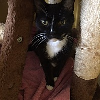 Adopt A Pet :: Heidi - Canton, OH