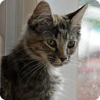 Adopt A Pet :: Climber - RM - Orlando, FL
