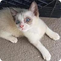 Adopt A Pet :: Jon Snow - Boca Raton, FL