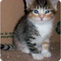 Adopt A Pet :: Rainbow - lake elsinore, CA