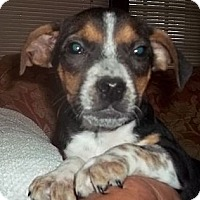 Adopt A Pet :: Snappy - Londonderry, NH