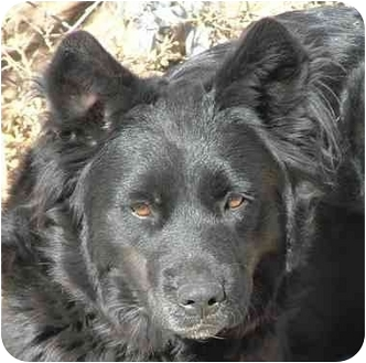 Hound (Unknown Type) Mix Dog for adoption in Santa Fe, New Mexico - Juba